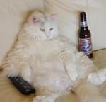 lazycat1